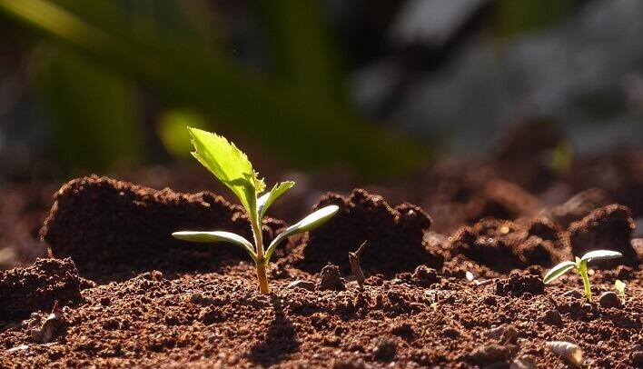 土から萌え出た若葉の写真